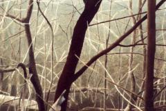 Bomen (1), 21,3 x 22,3 cm, olieverf op mdf.  Verkocht