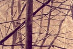 Bomen (2), 15,2 x 12,6 cm, olieverf op mdf. Verkocht.