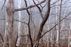 Bomen (3), 100 x 122 cm, olieverf op mdf.  Verkocht.