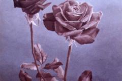 Twee rozen. 40 x 30, olieverf op doek. Verkocht.